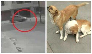 Independencia: sujeto arrolla a perros para vengarse de su vecina