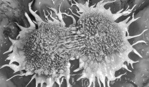 Científico español descubre el origen de la metástasis