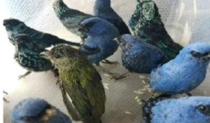 Detienen a ciudadano belga que pretendía salir del país con 20 aves peruanas