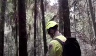 Australia: bomberos buscan salvar árboles de la época de los dinosaurios