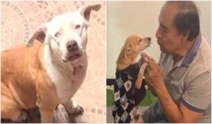 Chorrillos: perro pitbull mata a chihuahua en parque