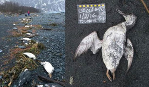 Aumento de temperatura en el océano Pacífico provoca muerte masiva de aves marinas