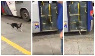 Facebook: perro callejero espera el bus para recibir un poco de comida y conmueve a la red