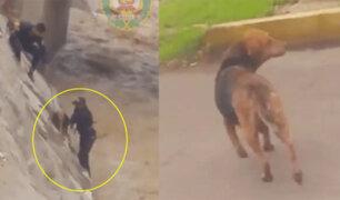 Policías rescatan a perro que estuvo a punto de ser arrastrado en río caudaloso