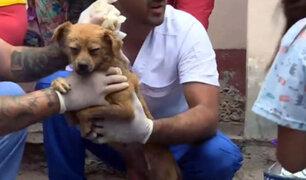 Tragedia en VES: mascotas deambulan buscando comida y ayuda