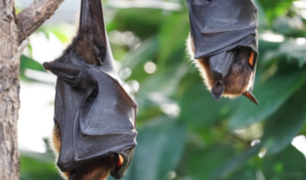 Coronavirus: ¿es la sopa de murciélago china la causa de la enfermedad?