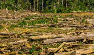 Tala de árboles causa el 35% de gases de efecto invernadero en Perú