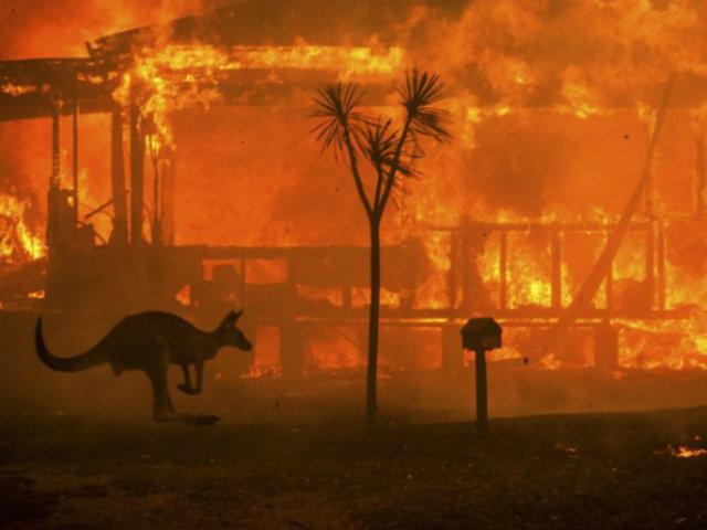 Australia: 500 millones de animales han perecido ante incendios forestales