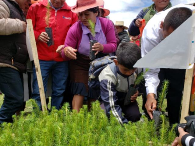 Inician reforestación de más de 1.6 millones de plantones en todo el país