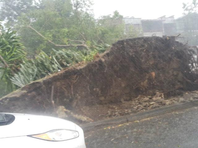 Medellín: árboles derribados y calles convertidas en ríos dejó fuerte temporal