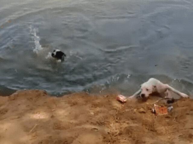 Piura: dos sujetos lanzan al río a sus perros