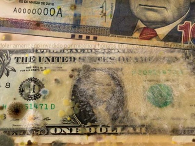 Estudio revela que billetes concentran hasta 3 mil tipos de microbios