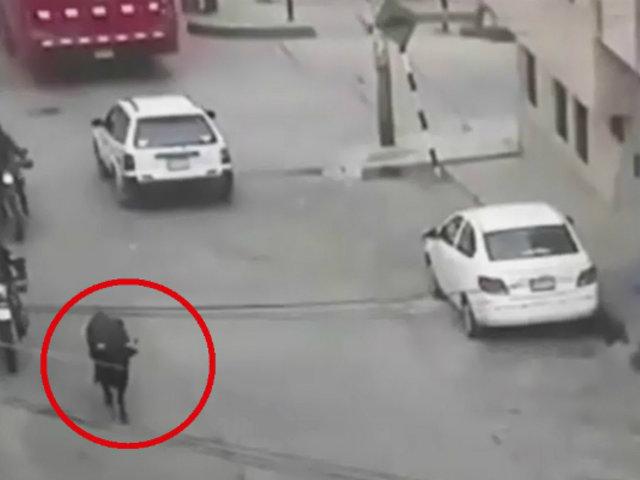 Toro se escapa en Huaraz: causó pánico y dejó 7 heridos
