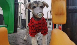 Chinos ponen máscaras a sus mascotas por miedo al coronavirus