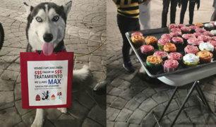Facebook: muere Max, el perrito que vendía cupcakes para pagar su tratamiento contra el cáncer