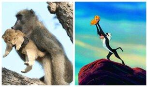 [VIDEO] YouTube: babuino recreó escena de 'El Rey León', pero el final fue terrible