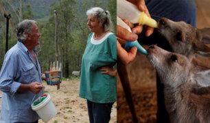 ¡Admirable! Tras incendios, pareja australiana se dedica a rescatar canguros