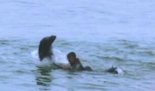 Namibia: foca sorprendió y asustó a un grupo de surfistas