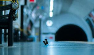 Selva de cemento: la increíble foto premiada de dos ratones peleando en un metro