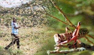 Plaga de langostas afecta a varios países en África
