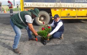 Tumbes: incautan arreglos florales que portaban plaga 'Dragón Amarillo'