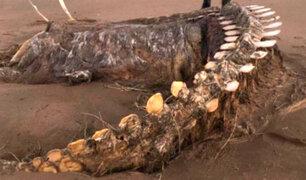 Extraño esqueleto gigante varado en una playa se viraliza en Facebook