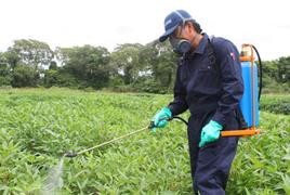 Minagri prohíbe importación de plaguicidas altamente tóxicos para aves y abejas
