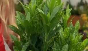 Combinado: ¡Todo sobre el cuidado de las plantas en verano!