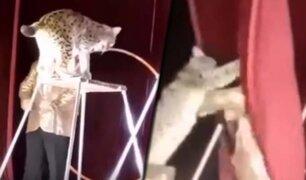 Felino ataca a domador de circo en Georgia