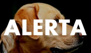 Alerta por mascotas: detectan primer caso de perro con coronavirus