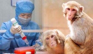 Coronavirus: científicos experimentan en monos en búsqueda de una vacuna