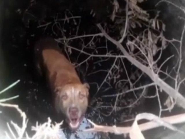 Tumbes: agentes policiales rescataron a perro que cayó a pozo