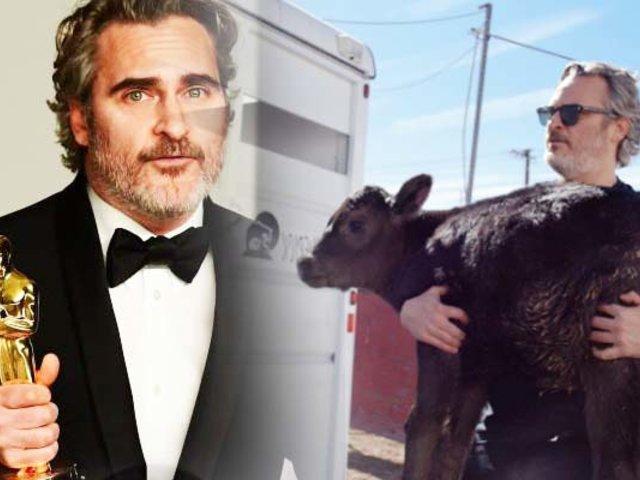 Joaquin Phoenix salva una vaca y a su cría del matadero
