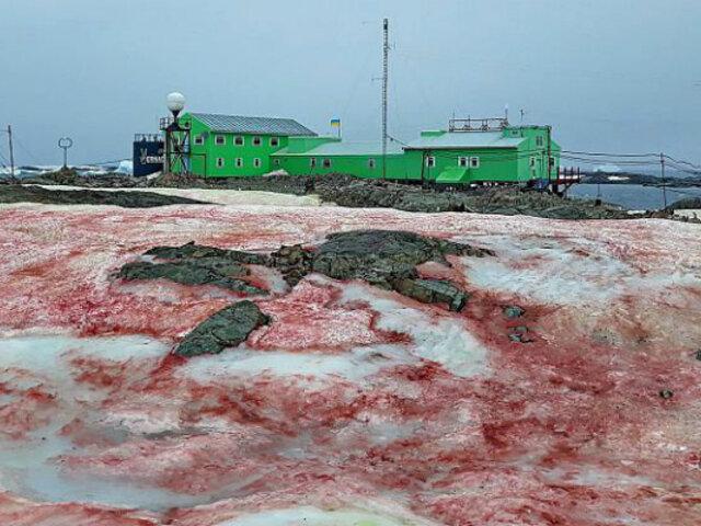 ¿Qué generó presencia de 'nieve de sangre' en la Antártida?