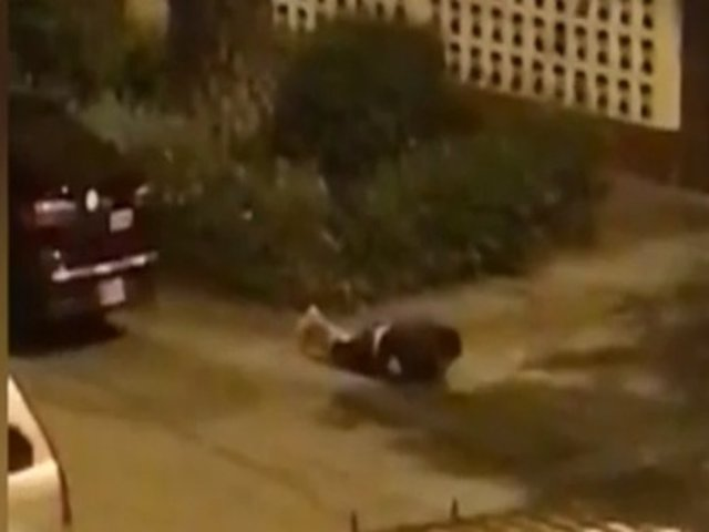 Surquillo: vecinos piden más seguridad tras hallazgo de joven dopado