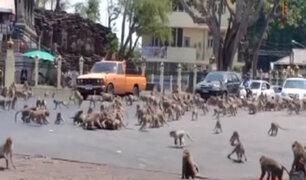Monos pelean por comida en Tailandia