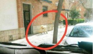 España: hombre se disfraza de perro para evitar cuarentena