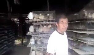 Alcalde de Lurín se comprometió a brindar alimento para codornices a avicultor que pedía ayuda
