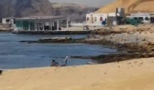 Playas al interior del país lucen limpias y sin contaminación
