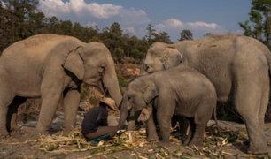 Tailandia: 78 elefantes son devueltos a su hábitat natural por falta de turistas