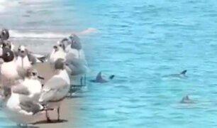 Impacto de la cuarentena en el medio ambiente: avistan delfines en playas de San Miguel