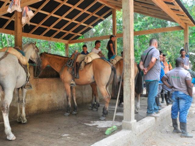 Los caballos de carga y su importancia en el desarrollo turístico