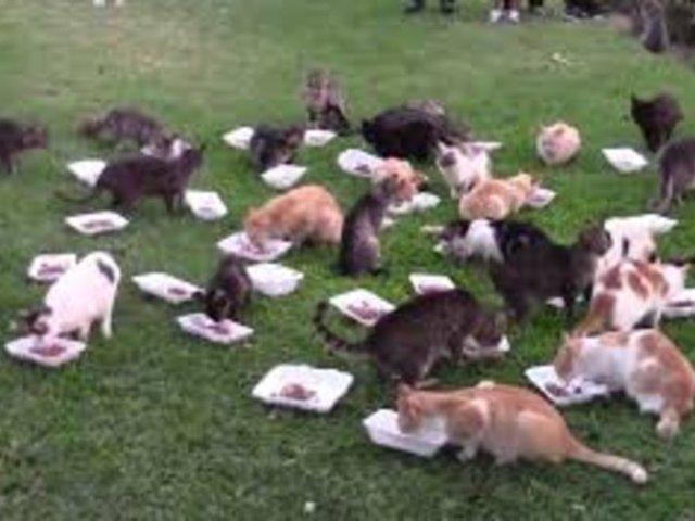 Miraflores: encuentran menos gatos en parque Kennedy