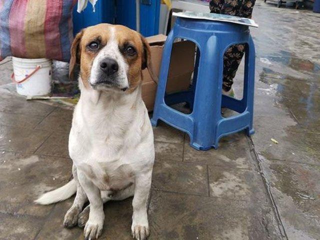 Animales callejeros entre los más vulnerables por el estado de emergencia