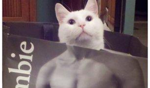 Coronavirus: gatos sensuales empiezan a invadir redes sociales durante cuarentena