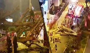 San Isidro: enorme árbol cae sobre un instituto en la avenida Arequipa