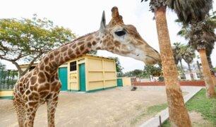 Parque de las Leyendas reforzó trabajos de limpieza y desinfección ante pandemia por coronavirus
