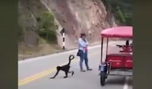 Tarapoto: monos salen a las calles a pedir comida