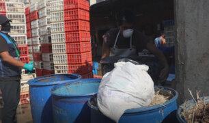 Santa Anita: clausuran avícolas que funcionaban en pésimas condiciones de salubridad