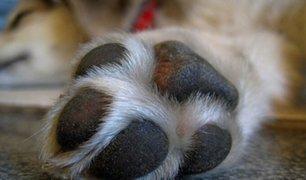 China ya no considera ganado a los perros y se prohibe criarlos para su consumo